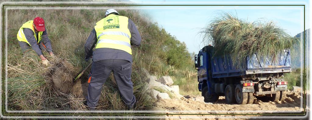 """restauracion ambiental BOSQUES DE CANTABRIA """"bosques de cantabria"""""""