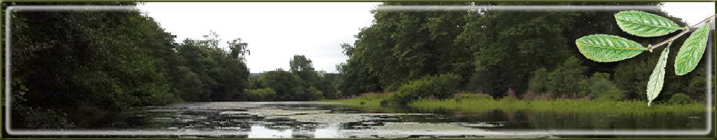 bosques de cantabria fullwitch